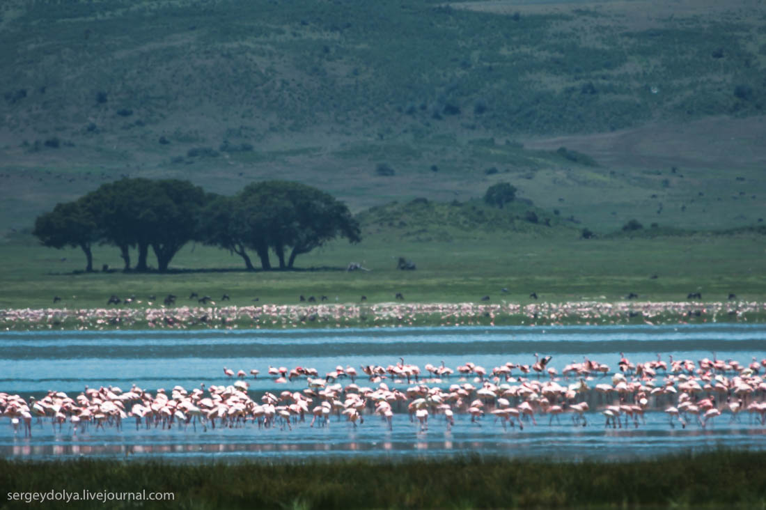 Ngorongoro is the best Safari in Africa 14