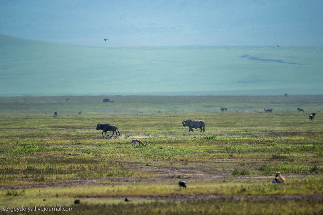 Ngorongoro is the best Safari in Africa 33