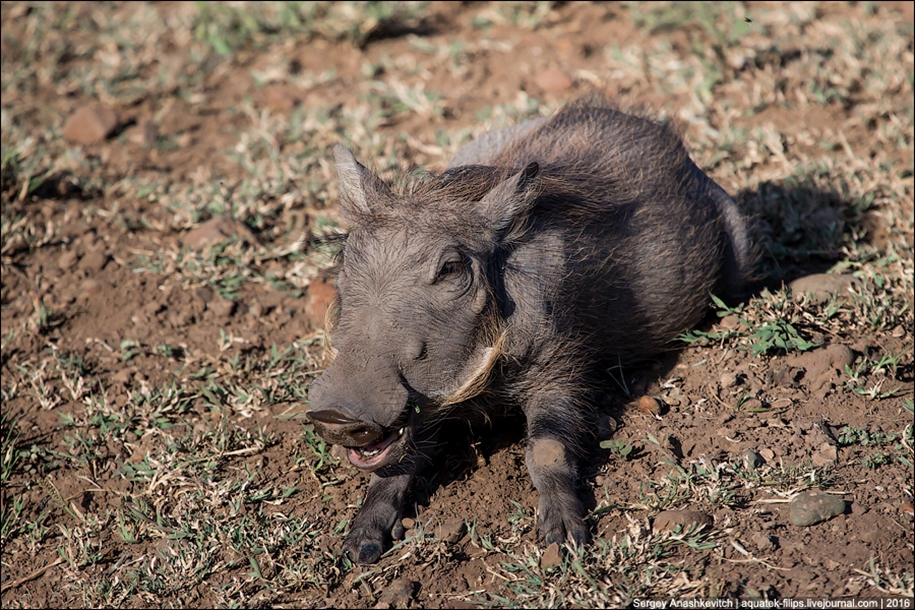 Pumbaa exist 05
