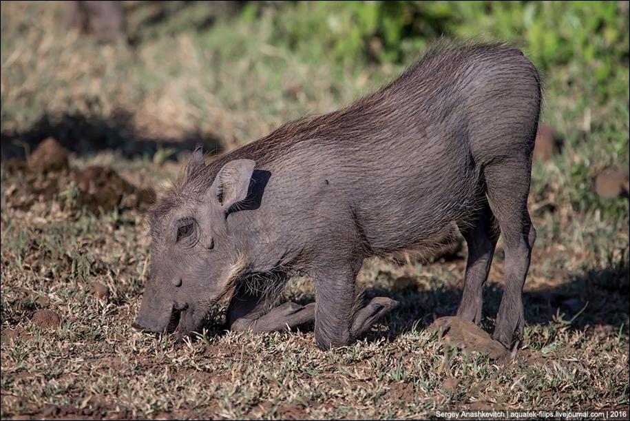 Pumbaa exist 07