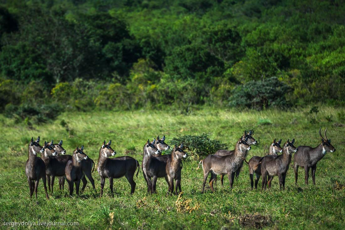 Safari in Tanzania 08