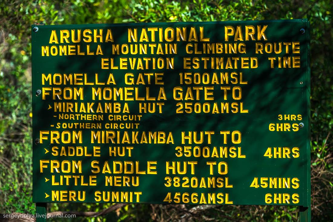 Safari in Tanzania 11