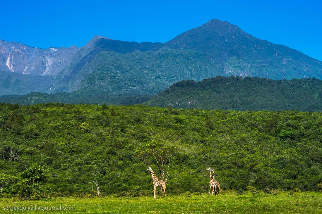 Safari in Tanzania 14