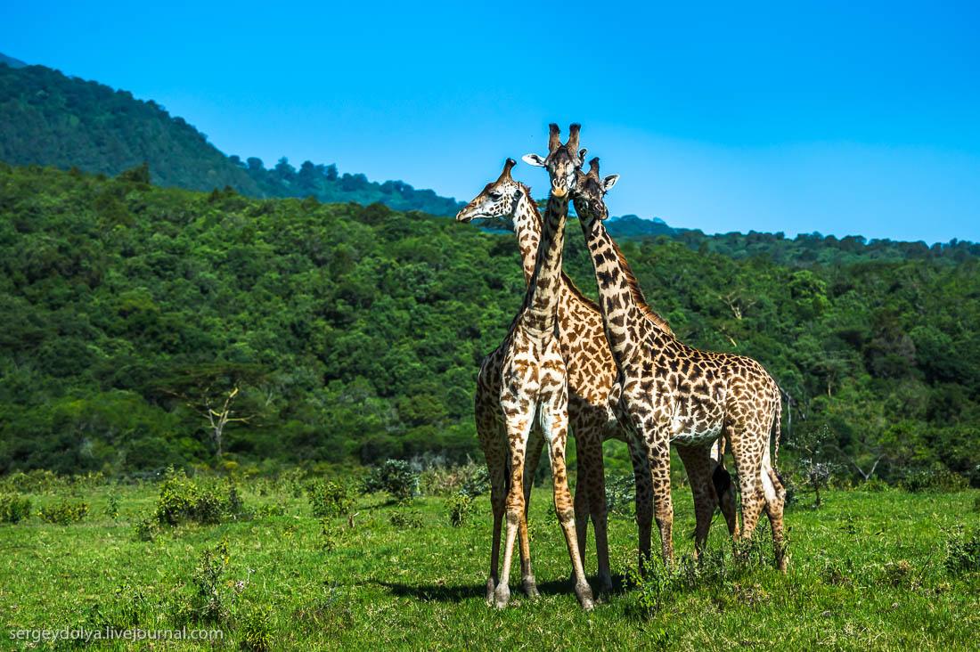 Safari in Tanzania 15