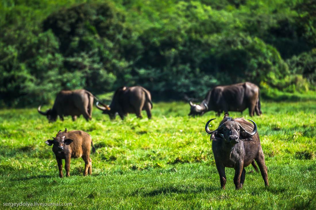 Safari in Tanzania 17
