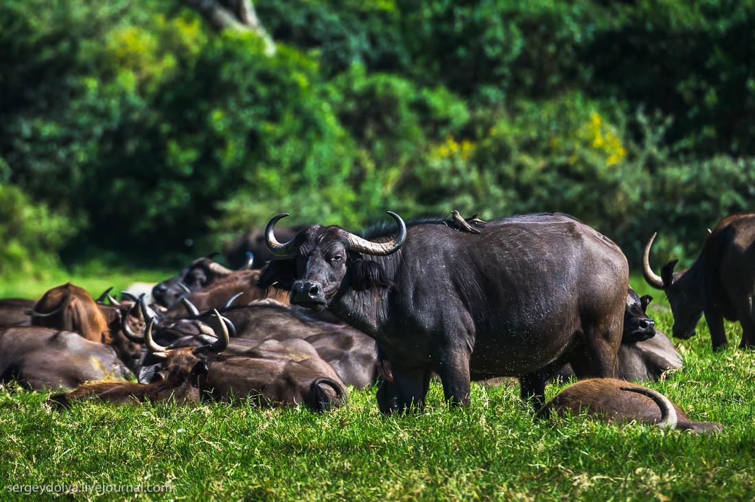 Safari in Tanzania 18