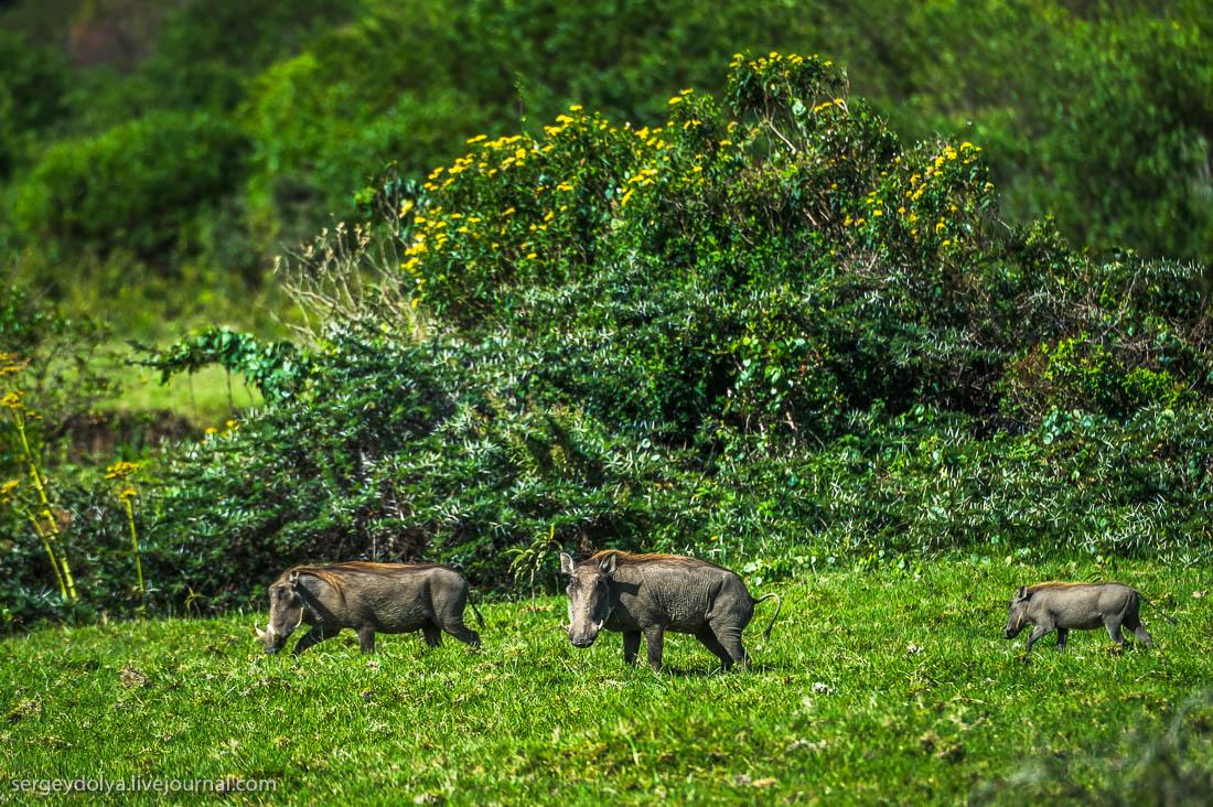 Safari in Tanzania 19
