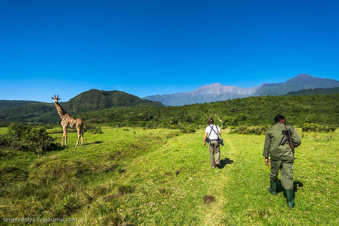 Safari in Tanzania 21