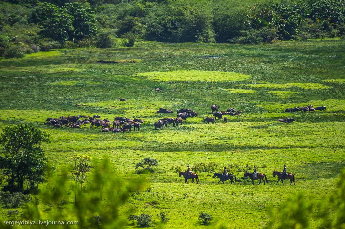Safari in Tanzania 27
