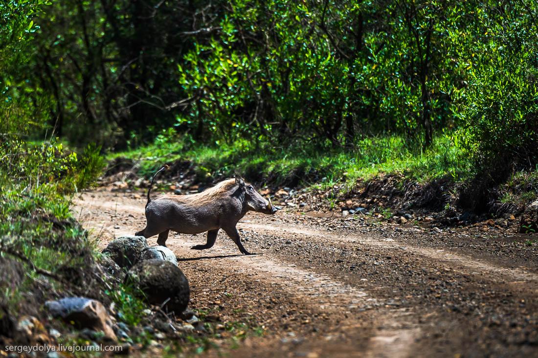 Safari in Tanzania 31