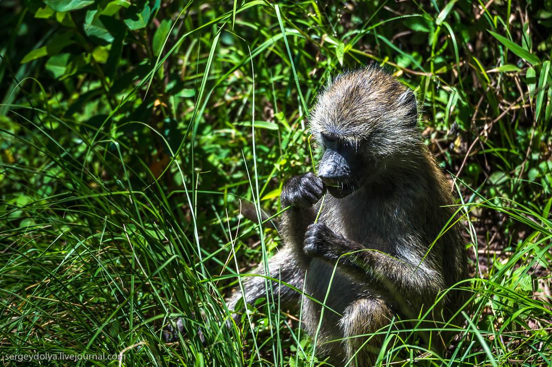 Safari in Tanzania 32