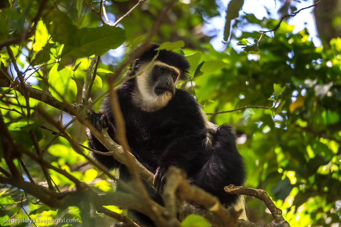 Safari in Tanzania 33