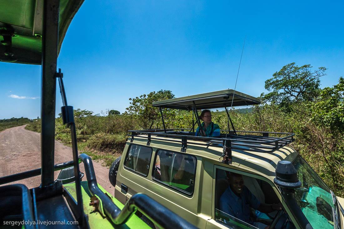 Safari in Tanzania 34