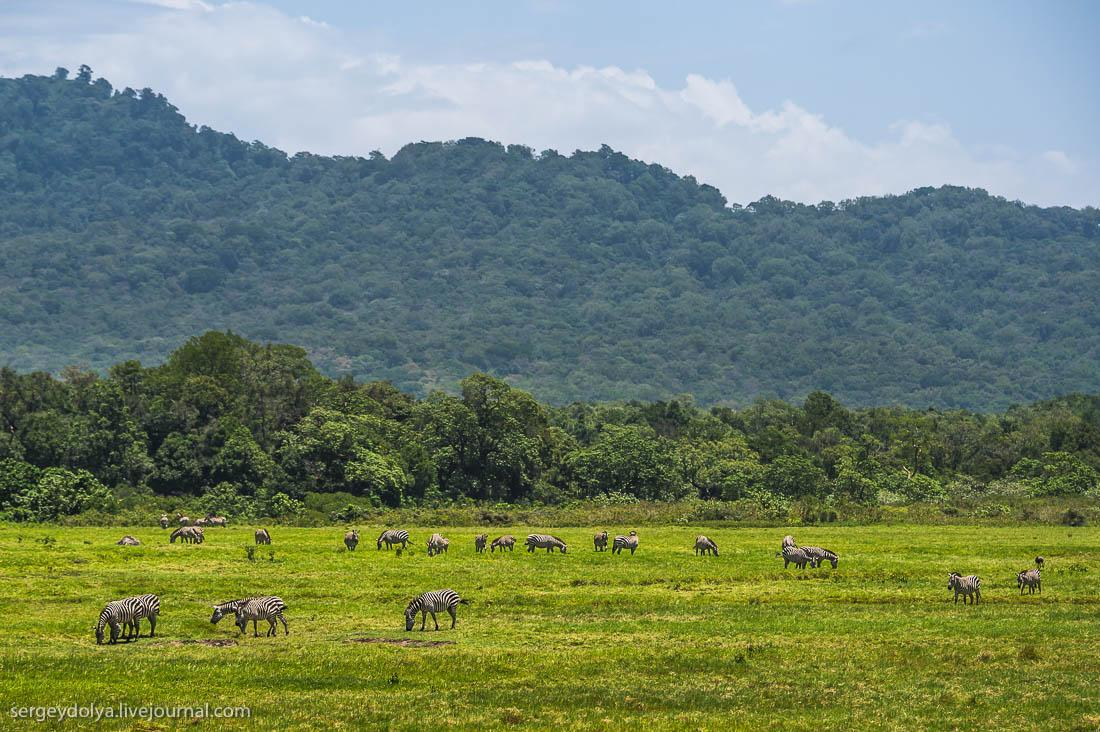 Safari in Tanzania 36