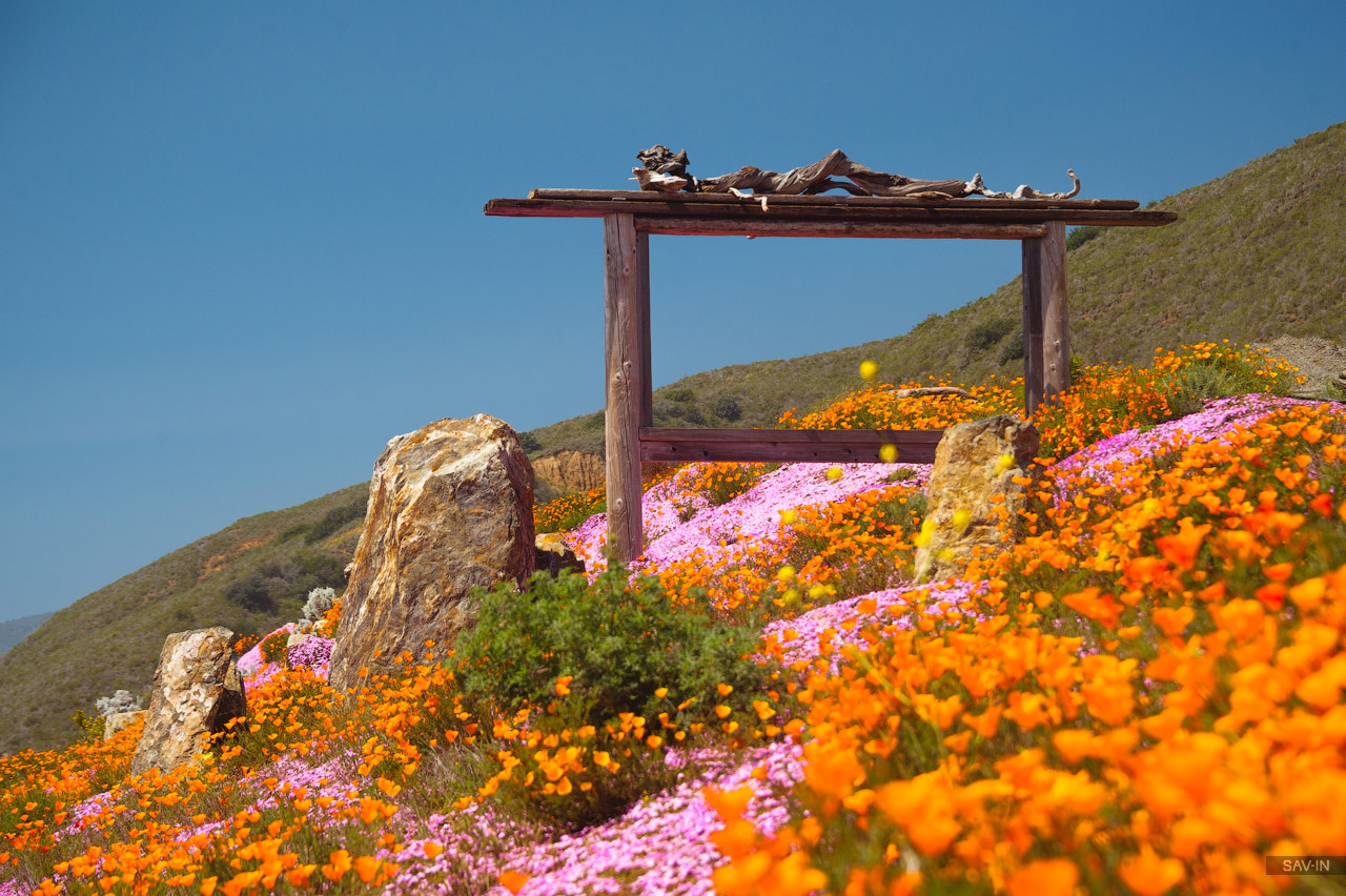 Santa Barbara and the California coast flowering 01