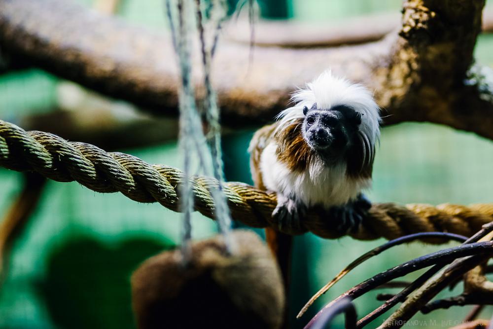 Tallinn zoo 31