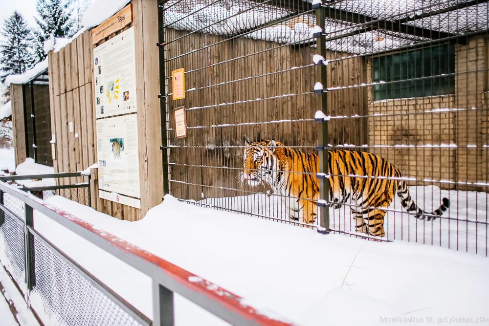 Tallinn zoo 37