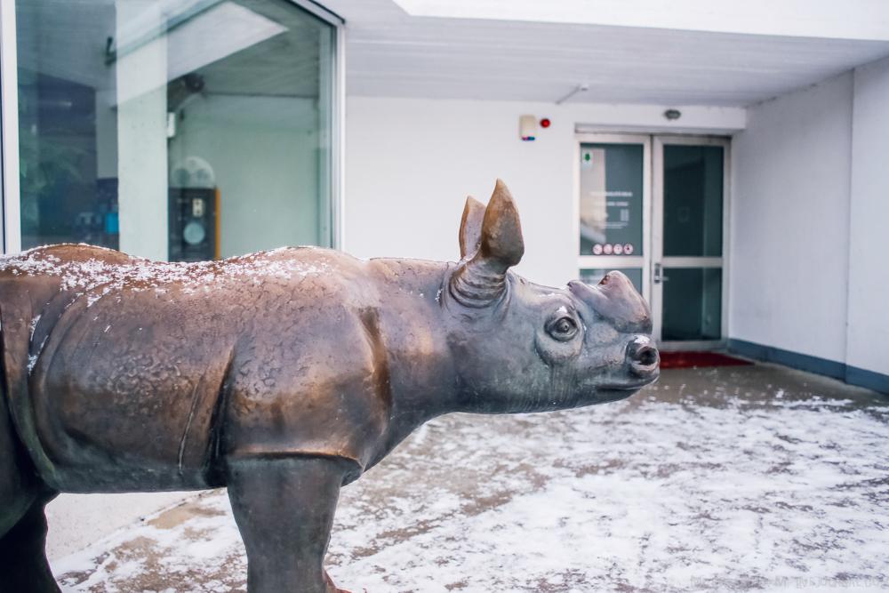 Tallinn zoo 38