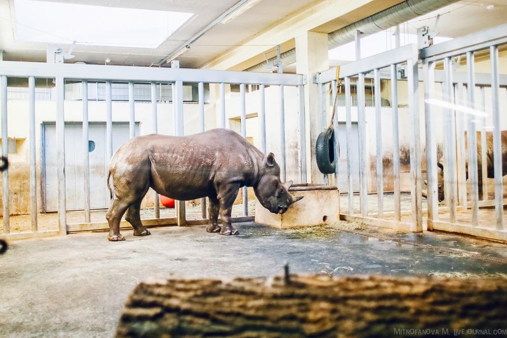 Tallinn zoo 39