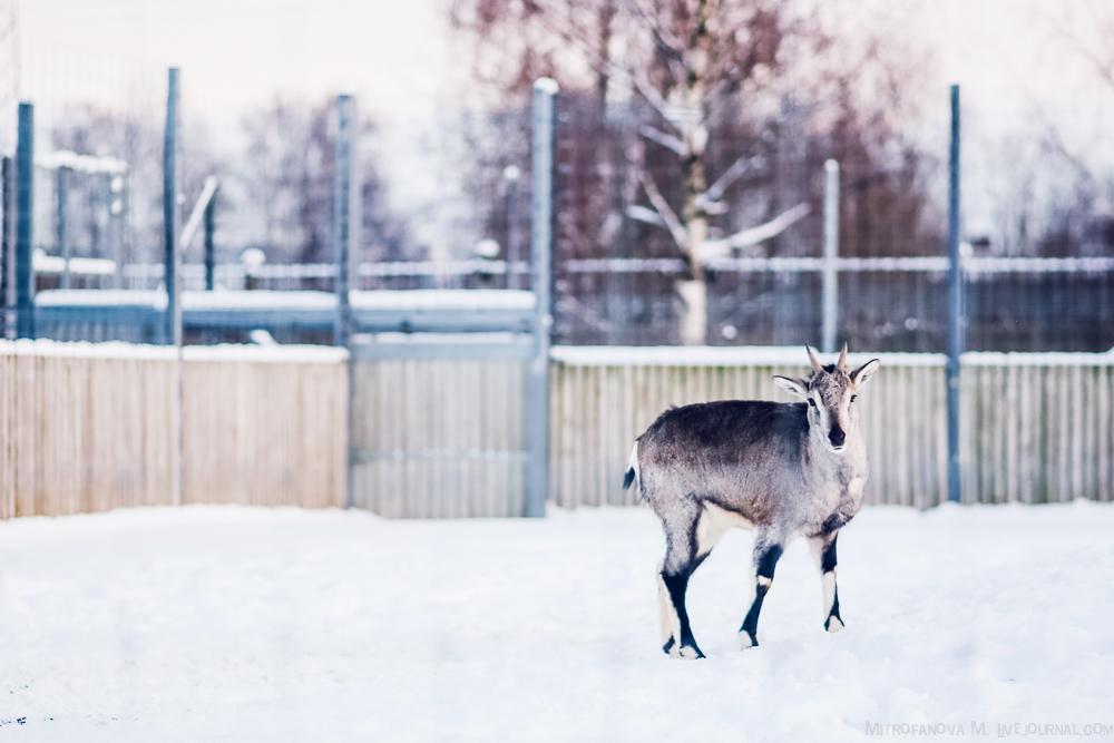 Tallinn zoo 41