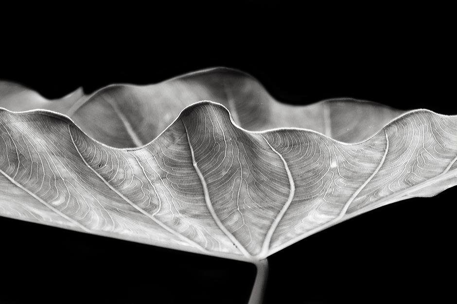 The art of black and white photography Enrique Pelaez 11