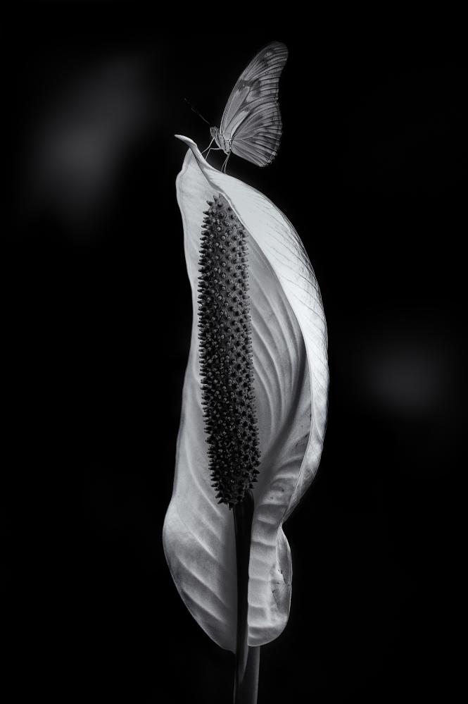 The art of black and white photography Enrique Pelaez 12