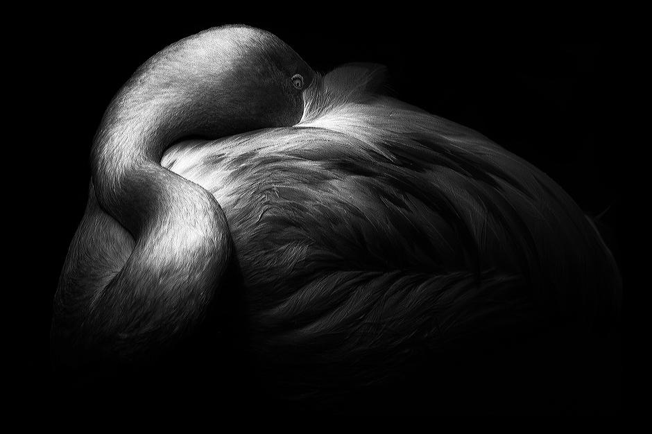 The art of black and white photography Enrique Pelaez 14