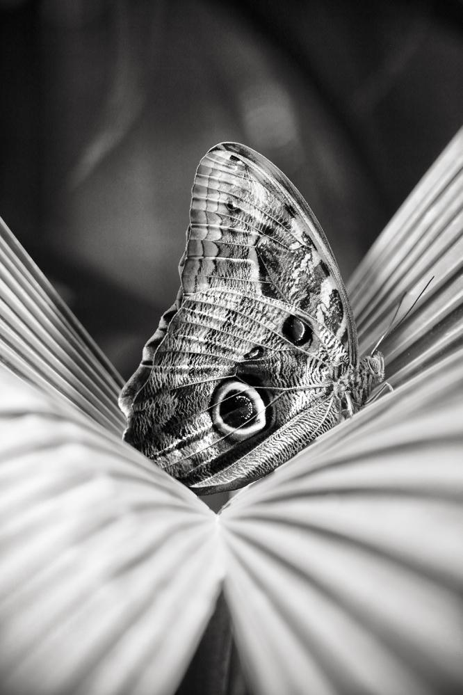 The art of black and white photography Enrique Pelaez 29