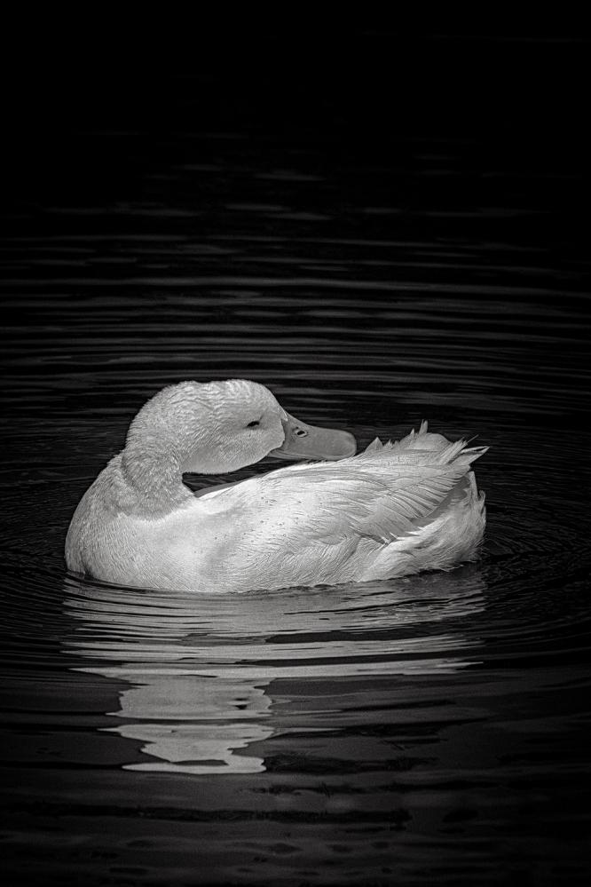 The art of black and white photography Enrique Pelaez 30