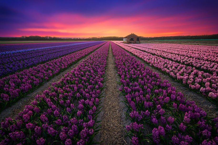 The beauty of the Netherlands in photographs by albert Dros 01