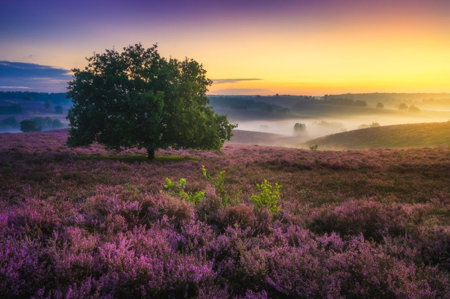 The beauty of the Netherlands in photographs by albert Dros 08
