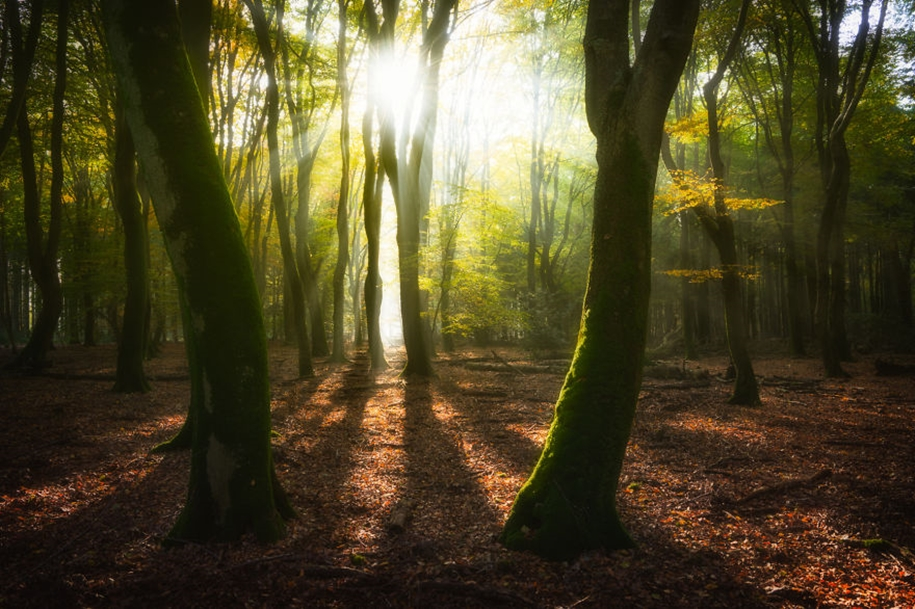 The beauty of the Netherlands in photographs by albert Dros 25