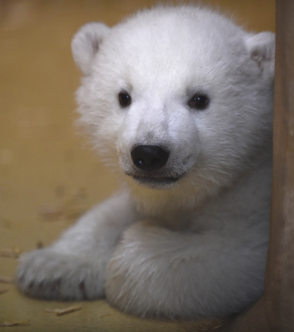 The first day of the polar bear 02