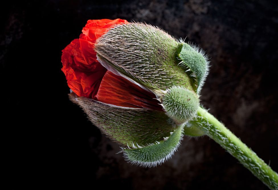 The winners of garden photography the International Garden Photographer of the Year 10