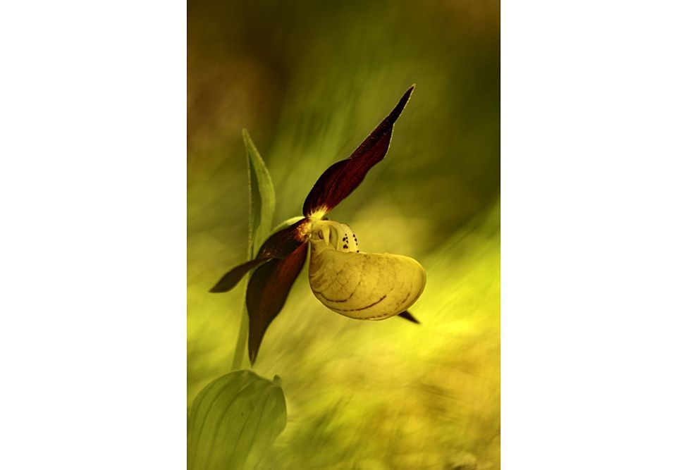 The winners of garden photography the International Garden Photographer of the Year 12