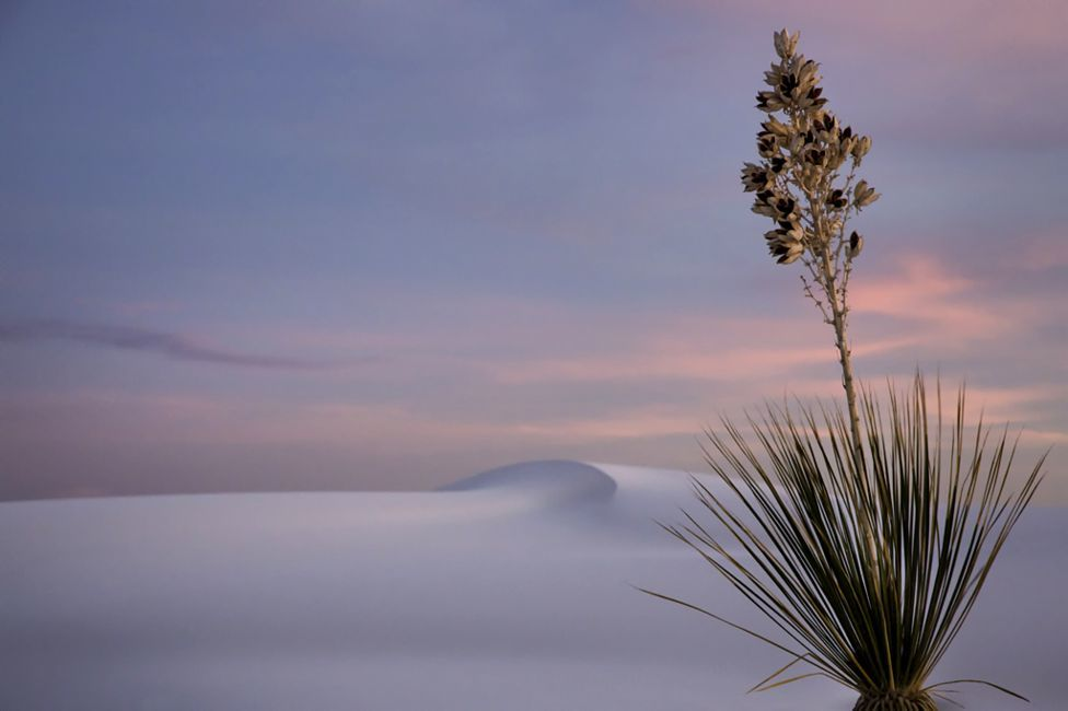 The winners of garden photography the International Garden Photographer of the Year 13
