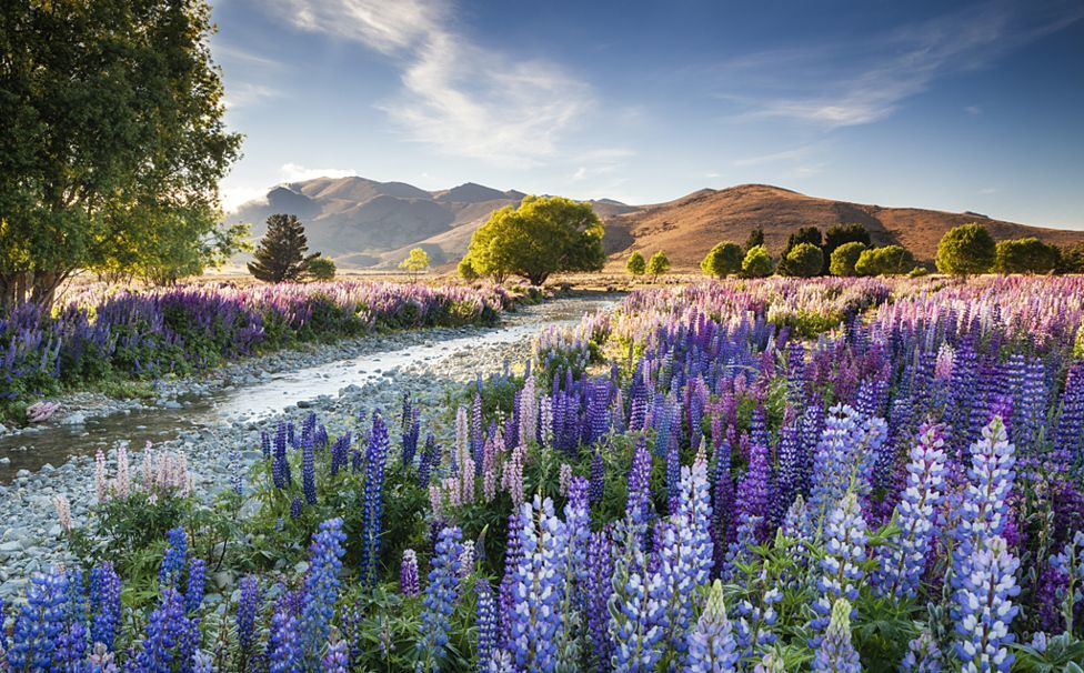 The winners of garden photography the International Garden Photographer of the Year 19