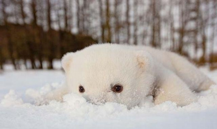 Touching photos of polar bears 03