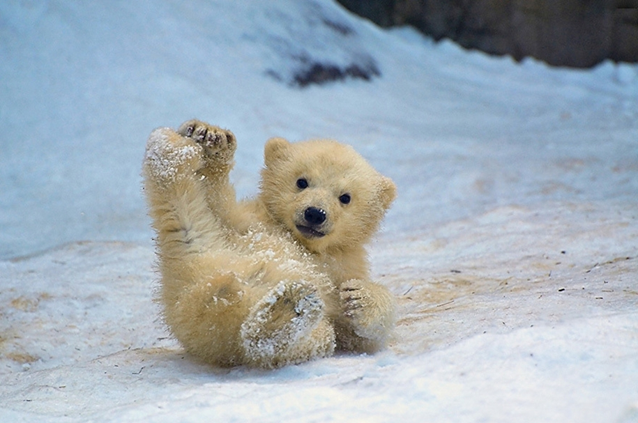Touching photos of polar bears 12