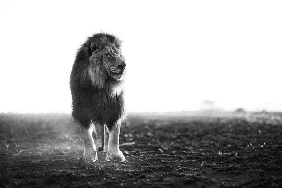Walk with lions 05