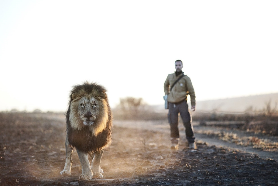 Walk with lions 11