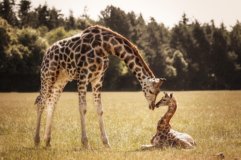 Warm pictures of large and small animals together 04