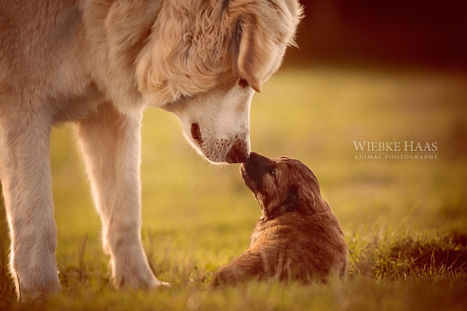 Warm pictures of large and small animals together 15