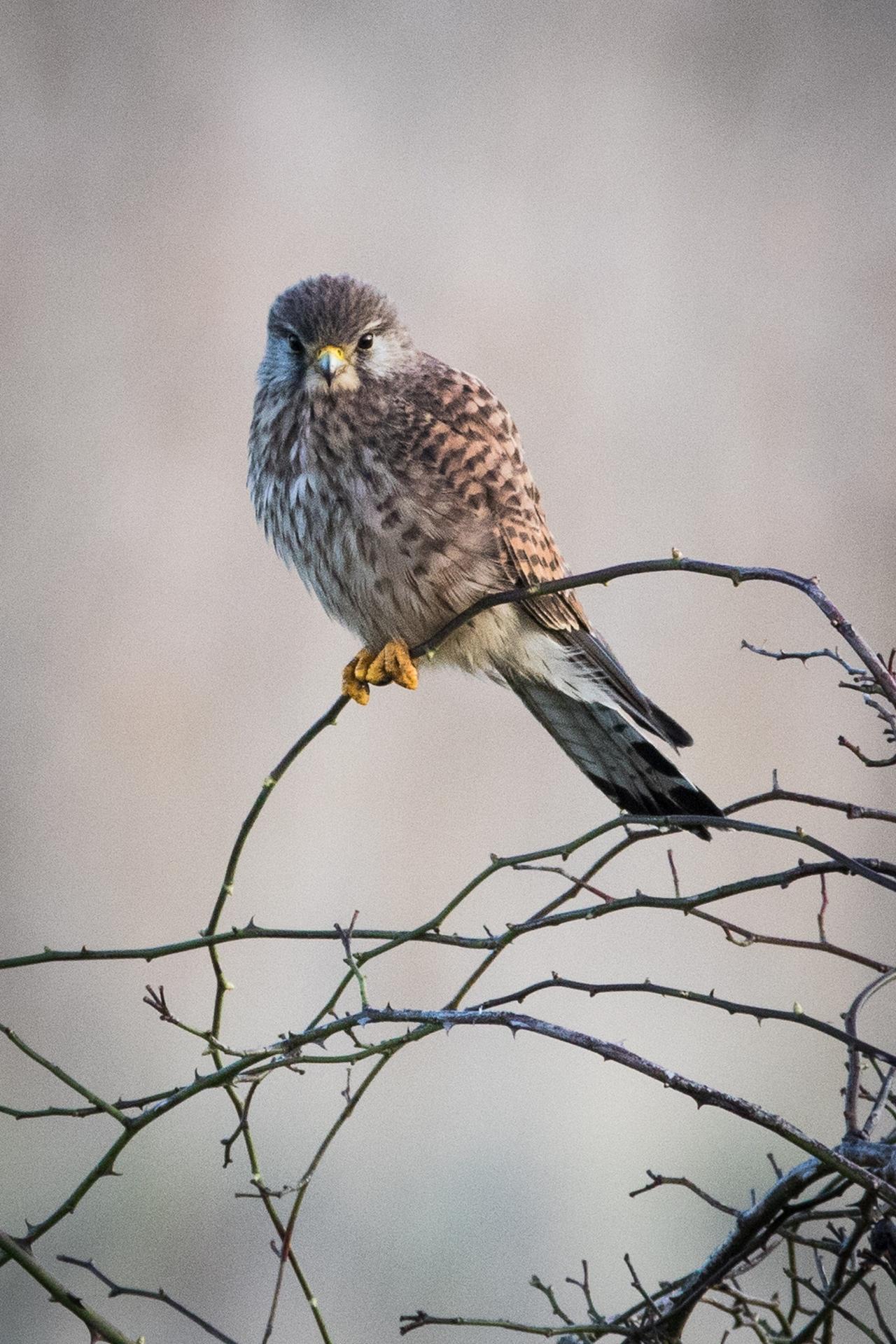 Wildlife in photographs Andrew Wakefield 04