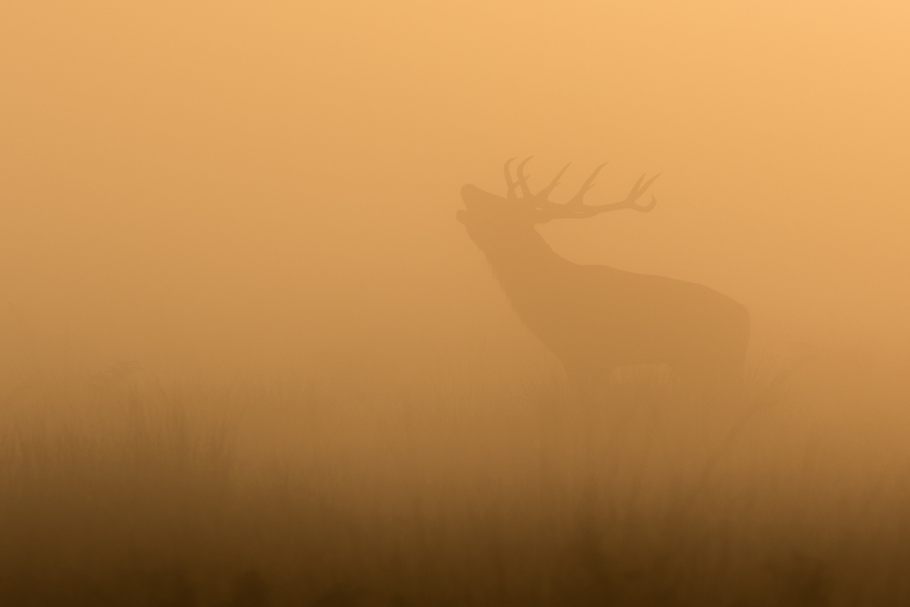 Wildlife in photographs Andrew Wakefield 05