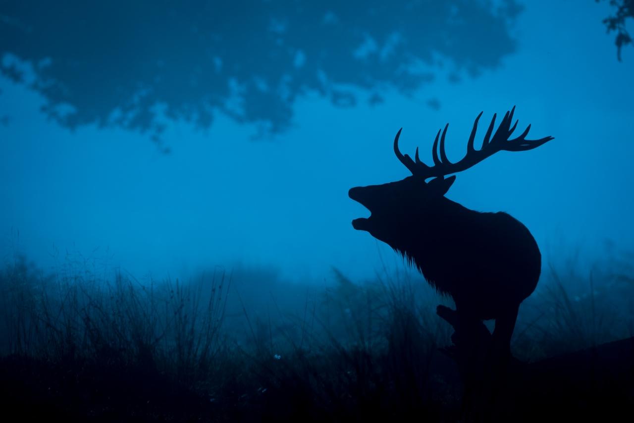 Wildlife in photographs Andrew Wakefield 10