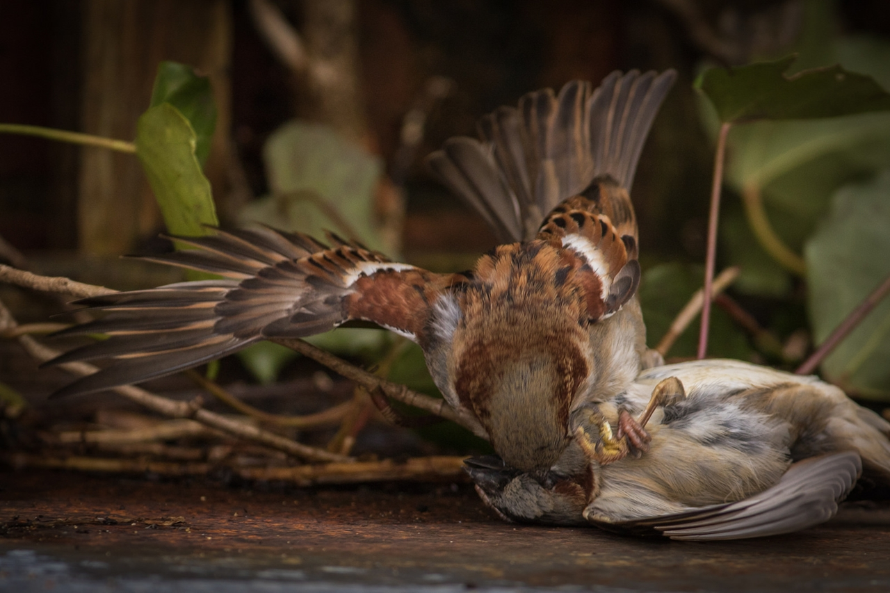 Wildlife in photographs Andrew Wakefield 13
