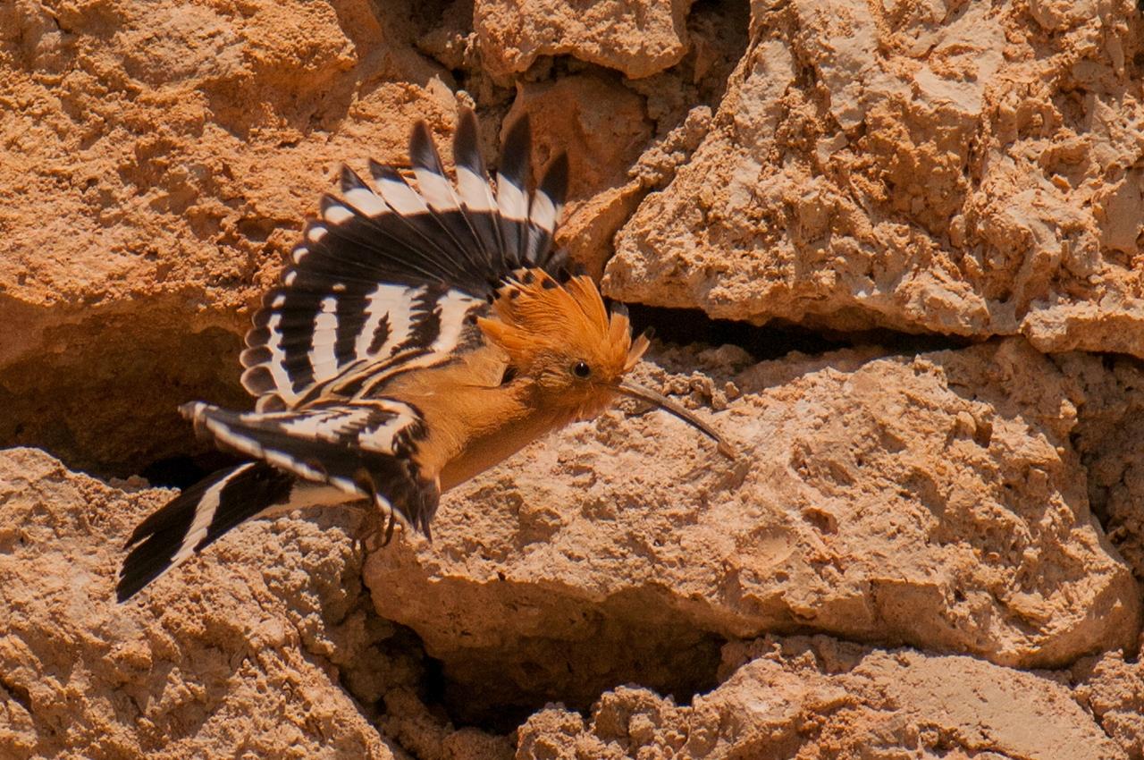 Wildlife in photographs Andrew Wakefield 19
