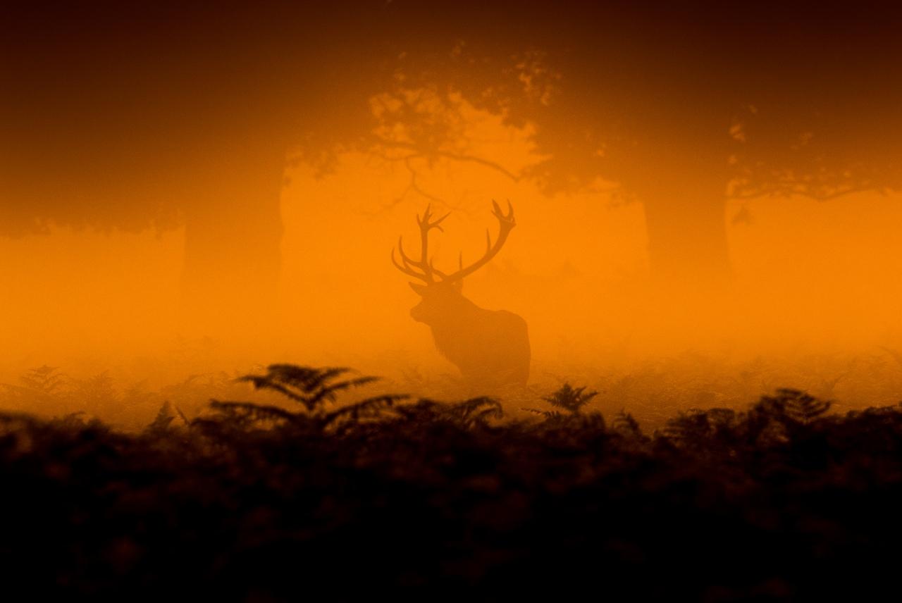 Wildlife in photographs Andrew Wakefield 21