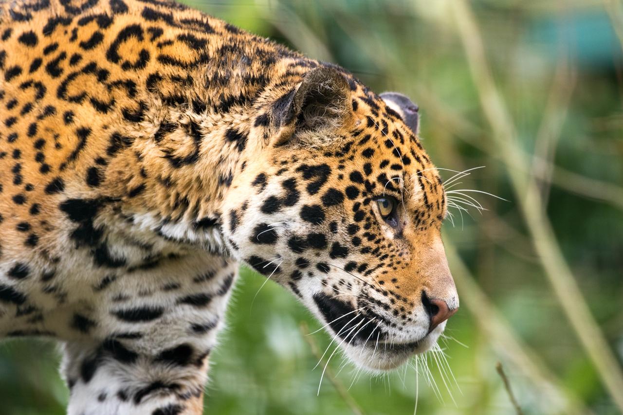 Wildlife in photographs Andrew Wakefield 31